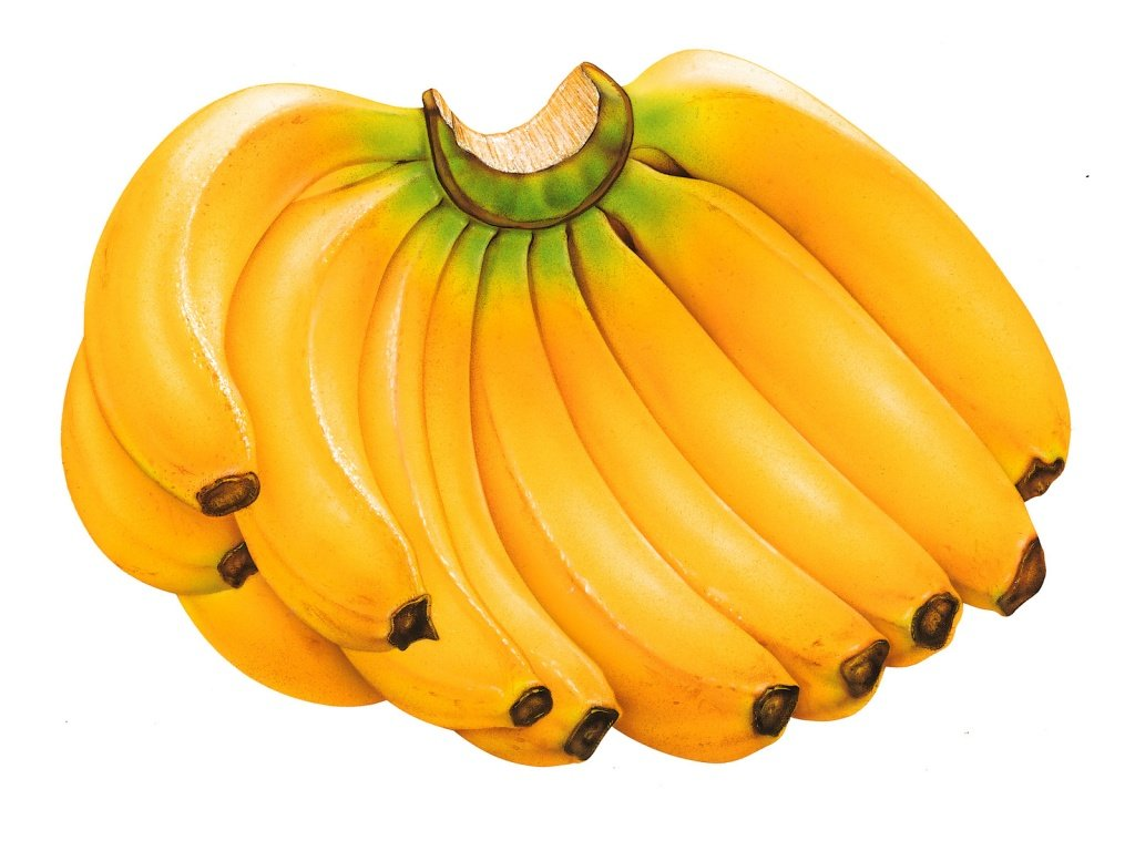 Gov. Committed To Saving Banana Industry  (St Lucia News)