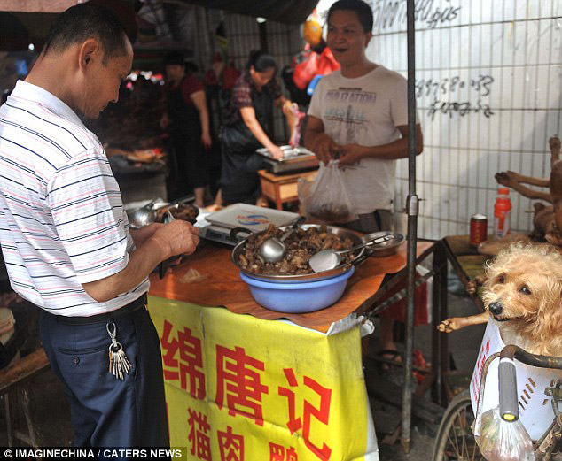Graphic video shows dogs being chopped up and cooked in front of diners