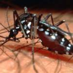 Health Ministry Goes On Dengue Offensive