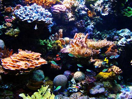 Fisheries Department Worried About Future Of Coral Resources  (St Lucia News)
