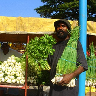 Agri. Ministry Pushing For Self Sustainability In Food  (St Lucia News)